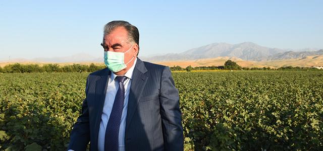 Президент Таджикистана дал старт сбору хлопка в Турсунзаде