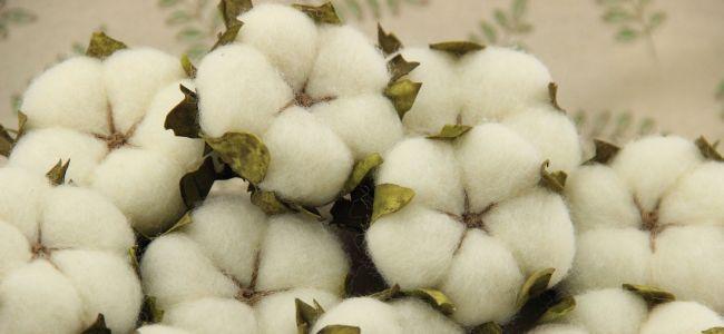Штаты ввели запрет на импорт хлопка из Туркмении