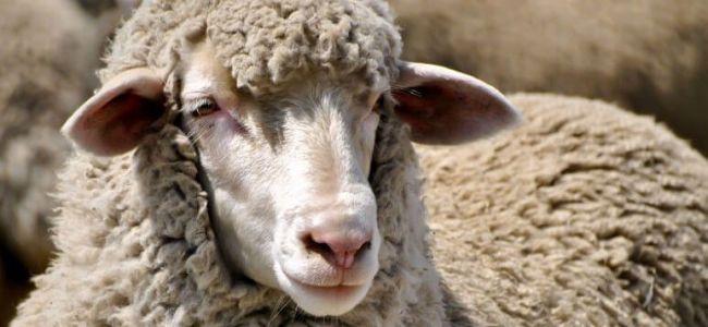 Казахстан будет поставлять шерсть в Китай